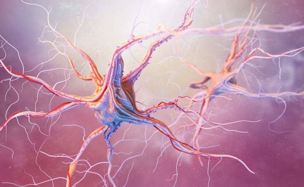 Neurons and nervous system